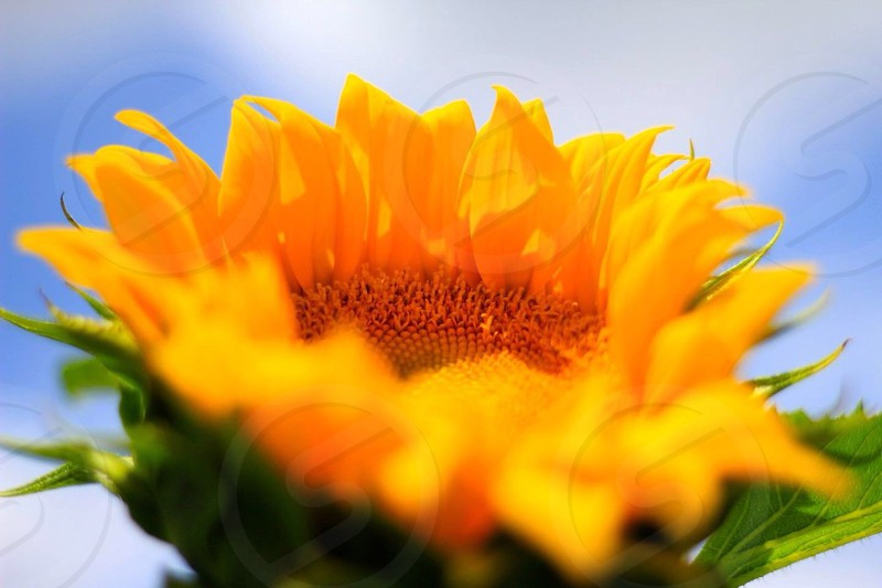 selective focus photography of yellow flower photo