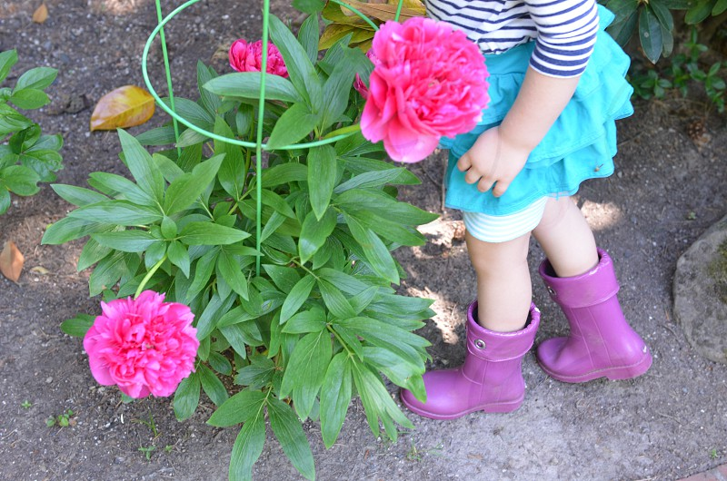 Garden peonies flowers girl child photo