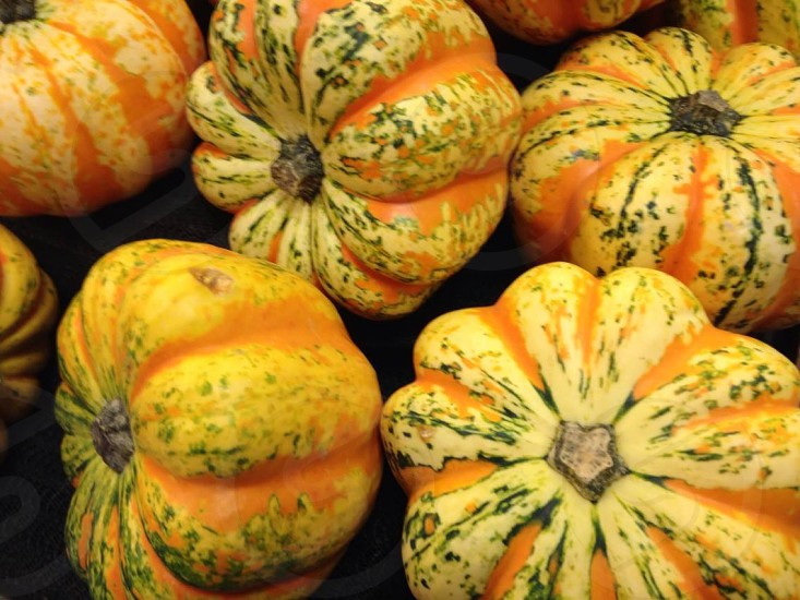 beauty in squash photo