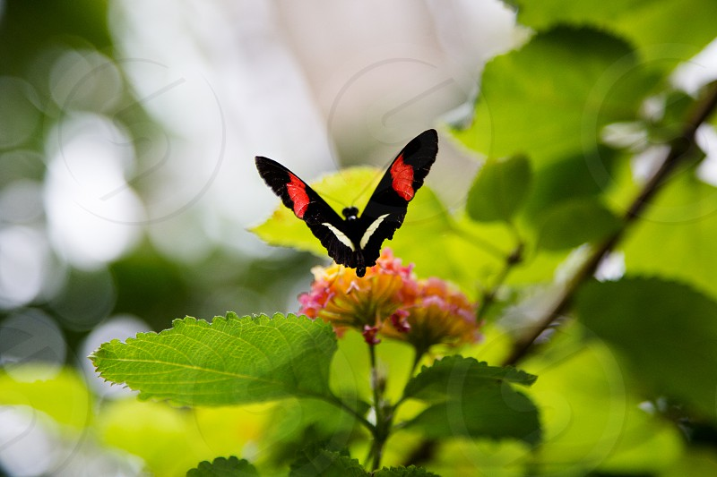 Butterfly on a flower with green leaves photo