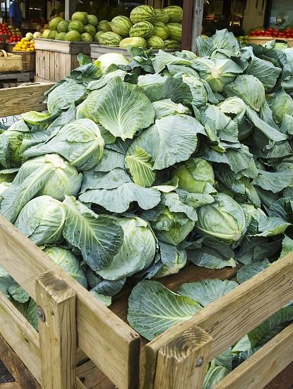 Farm Fresh Cabbage photo
