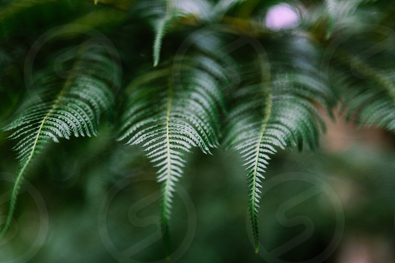 Mean green  botanical  botanic forest plants photo
