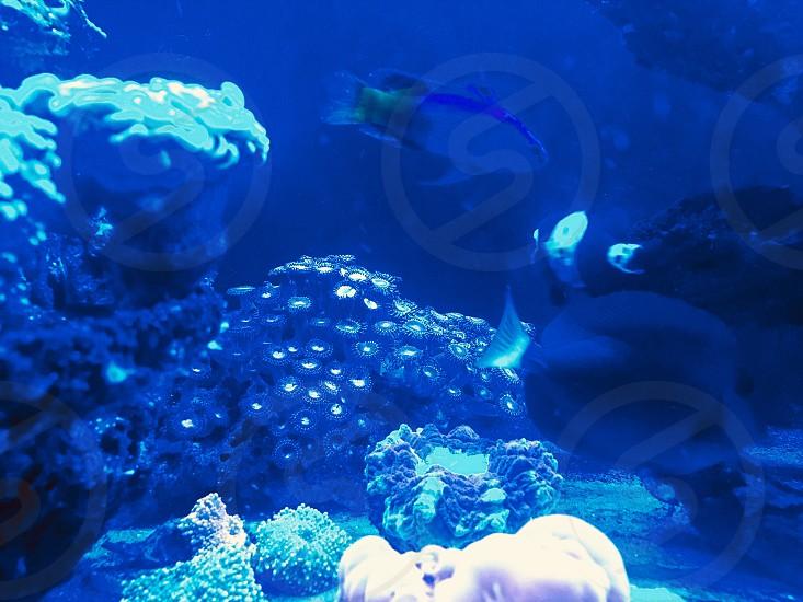 Fish tank pets water aquarium  photo