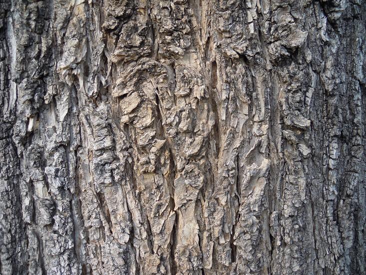 tree bark wood photo