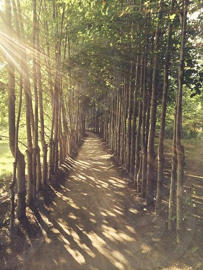 Path sun sunset trees park golden hour shine green  photo