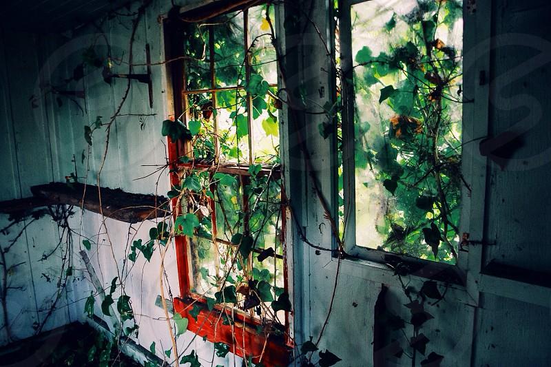 red window pane photo