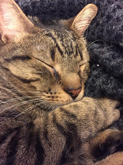 close up photo of a black and brown short fur car sleeping on the black area rug photo