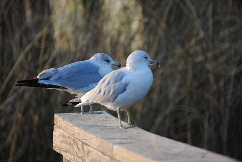 2 bird on concrete wood photo