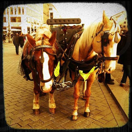 Berlin horses  photo
