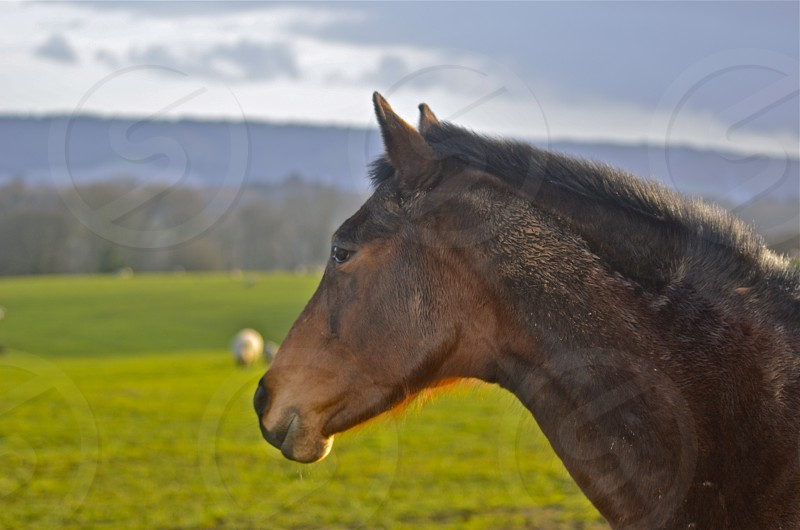 selective focus photography of brown horse standing on green grass field during daytime photo