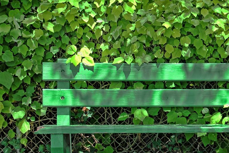 Green bench near green bushes Long Beach California photo