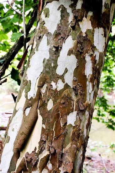 Colorful Bark photo