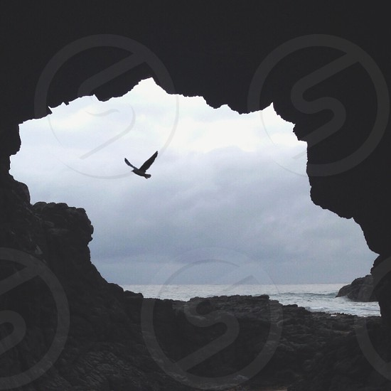 view of flying bird by the cave photo