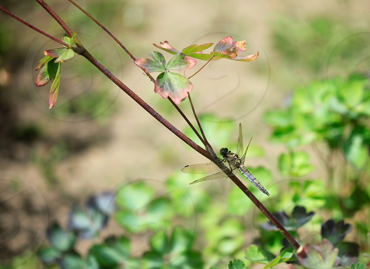 dragonfly on plant photo