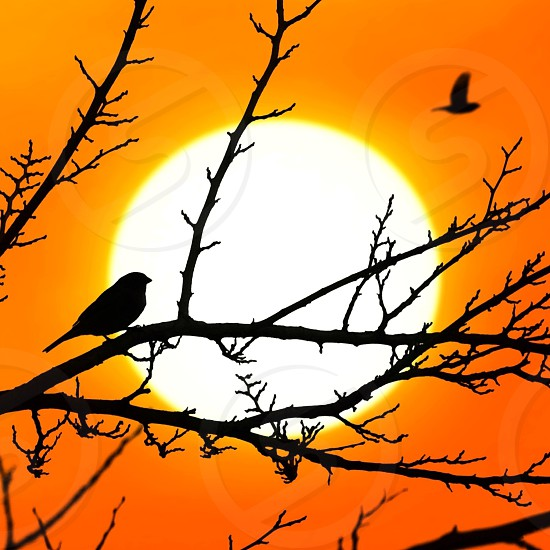 small birds on tree branch with orange sunset photo