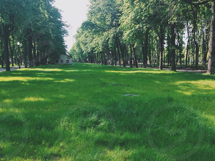 green green grass photo