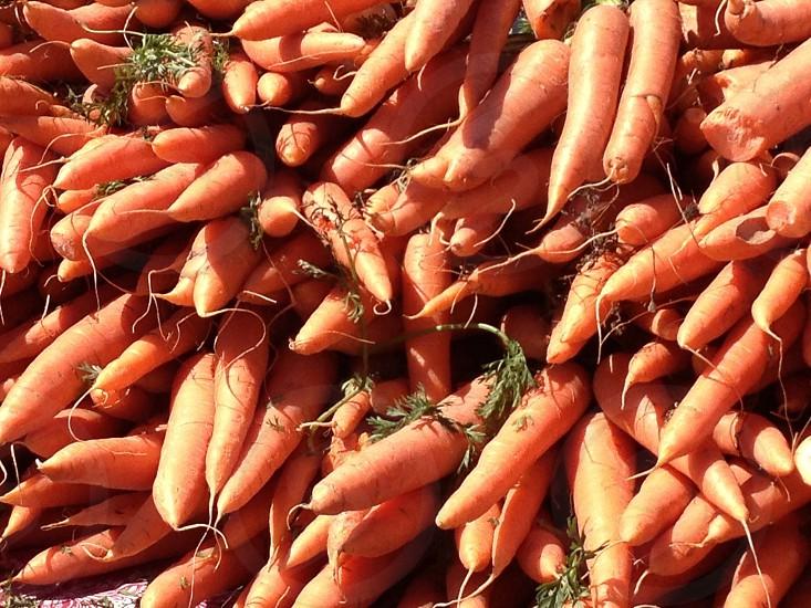 orange carrot lot photo