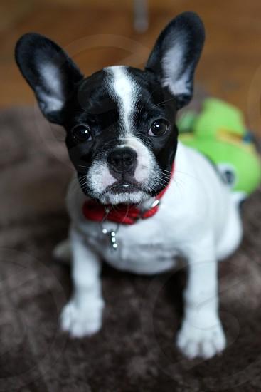 Puppy.  photo
