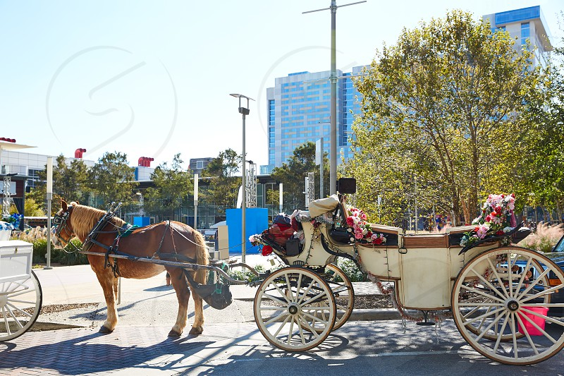 Houston Discovery green park horse carriages Texas photo