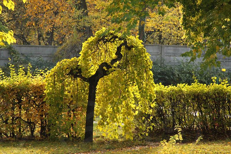 Cluj-Napoca - Botanic garden photo