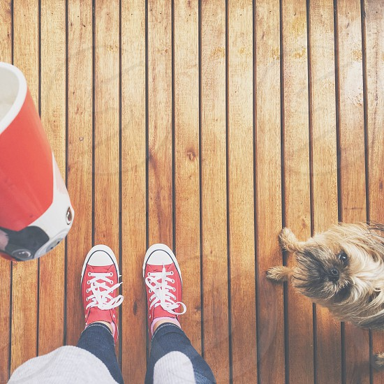 Snapwire    animal beverage brussels griffon frenchie French bulldog canine chill chilly coffee coffee mug competition contest converse domestic animal food french bulldog Brussels griffon dog mammal mug porch proposition rainy day social event×stand staring statement thrill vessel wood photo