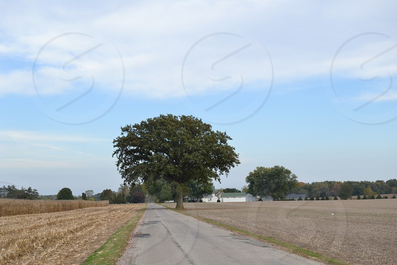 Country road tree corn field Indiana farm photo