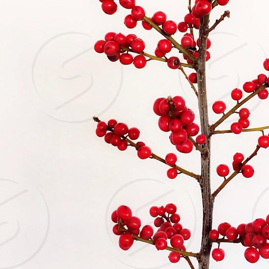 red round berries on brown stem photo
