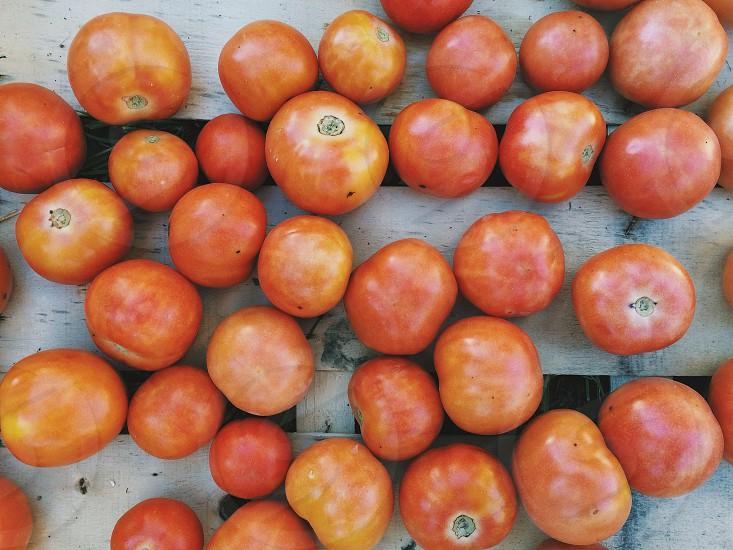 orange tomatoes photo