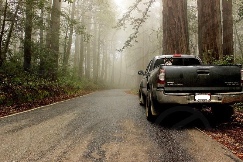 Travel Oregon truck dog photo