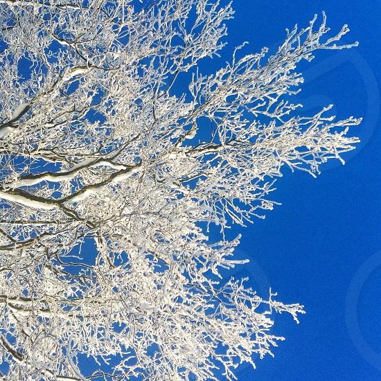 white wooden tree in winter season photo