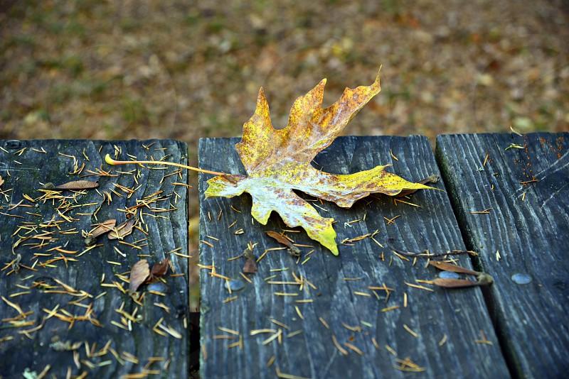 Table Leaf fall autumn photo