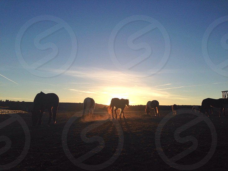 horse and sunset view photography photo