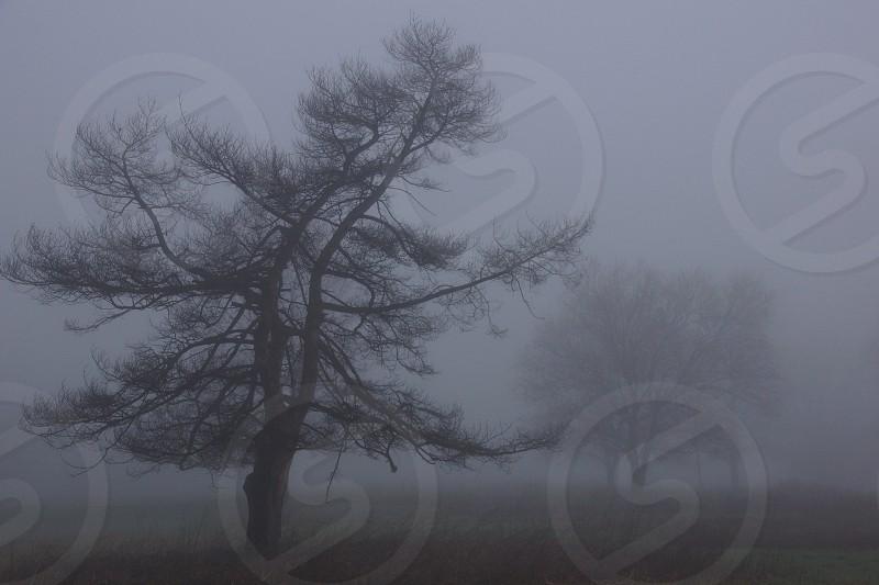 Pre-dawn. Tree. Silhouette. photo
