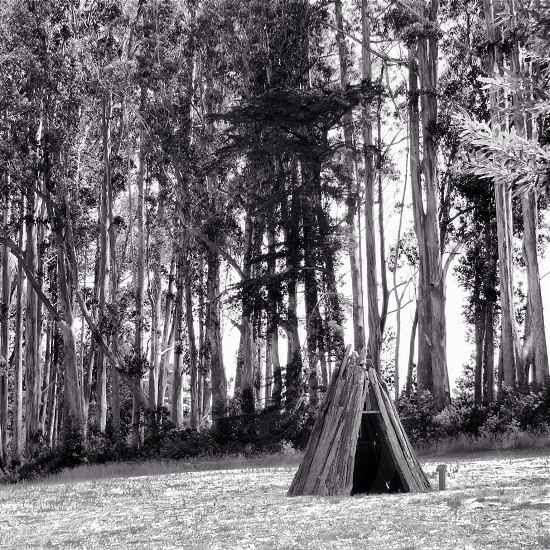 Structures trees black and white texture shot at the Miwok Site in Point Reyes Ca photo