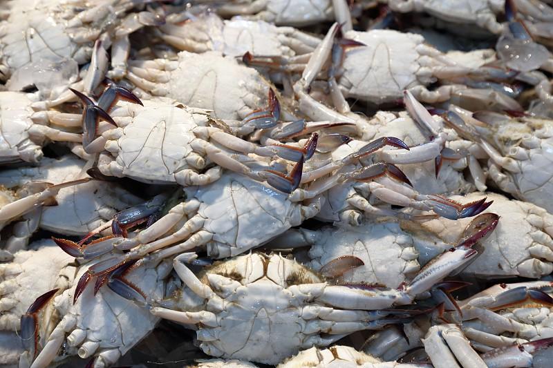pile of crabs at fish market photo