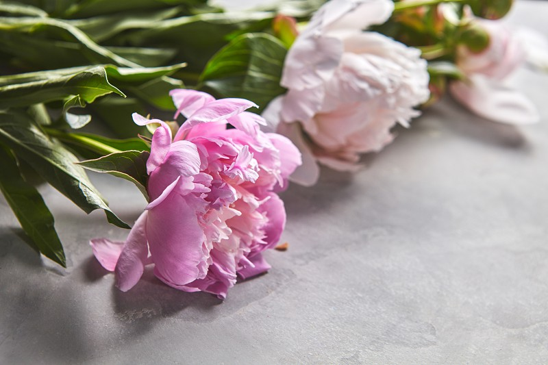 Fresh bouquet of pink and white peonies on a gray concrete background with copy space for text. Floral card photo