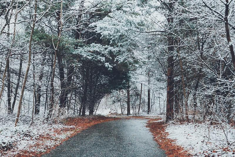black road way between green tall tress during daytime photo
