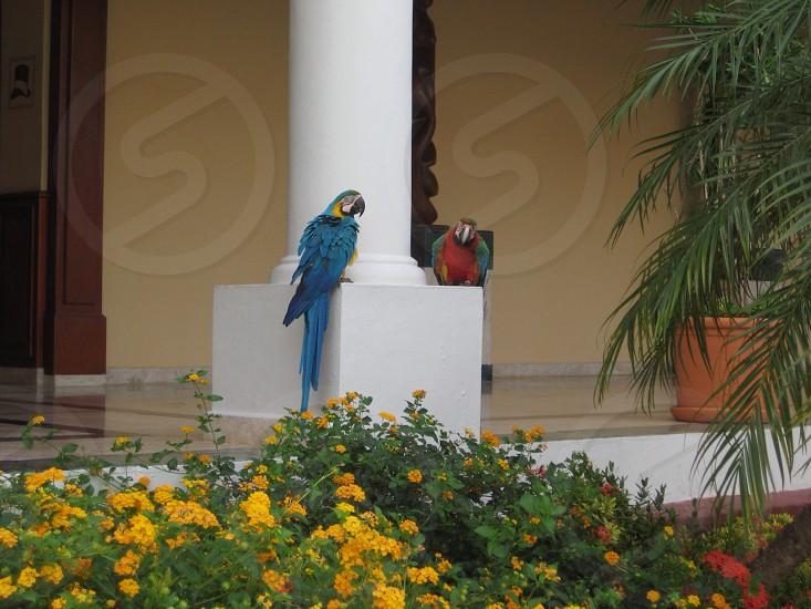 Cancun Mexico photo