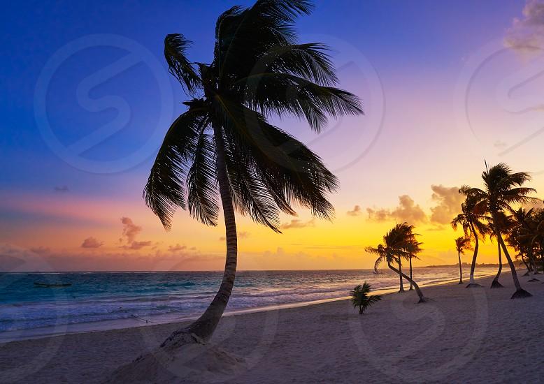 Tulum beach sunset palm tree in Riviera Maya at Mayan Mexico photo