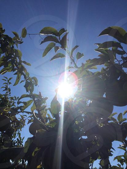 sun shining through tree branch photo