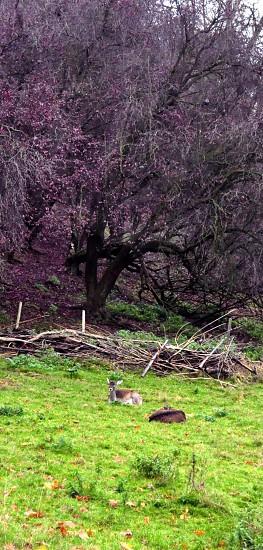 Purple trees deer reindeer photoshop landscape  photo