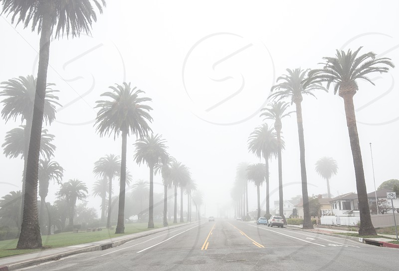 Fog surrounds road lined with palm trees photo