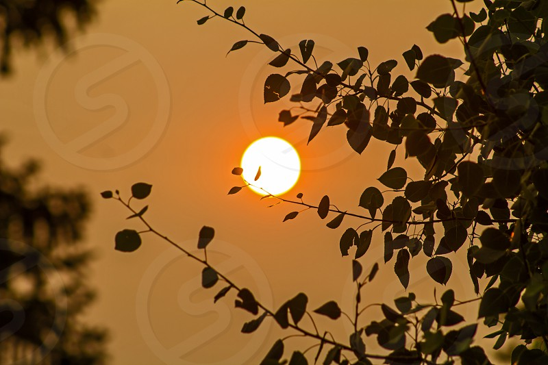 Smokey sun... Fires from WA created a lot of smoke in MT this was one of a few shots... photo