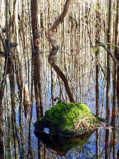 Swamp South Carolina low country spring water Sky nature landscape moss trees reflecting reflection mirror image mirror  photo