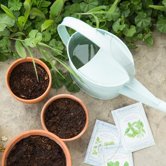 planting seeds photo