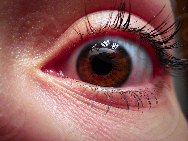 person with brown eye photo
