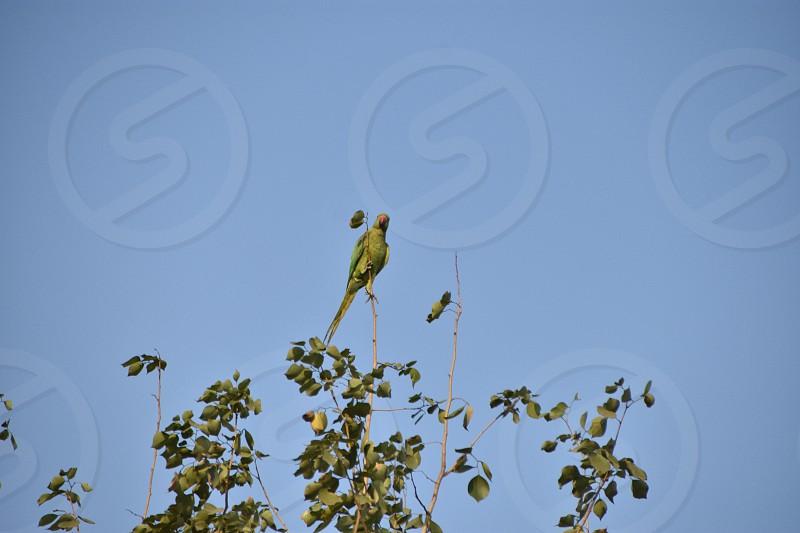 Parrot @BPS Mumbai photo
