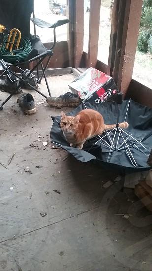 cat pet outside photo