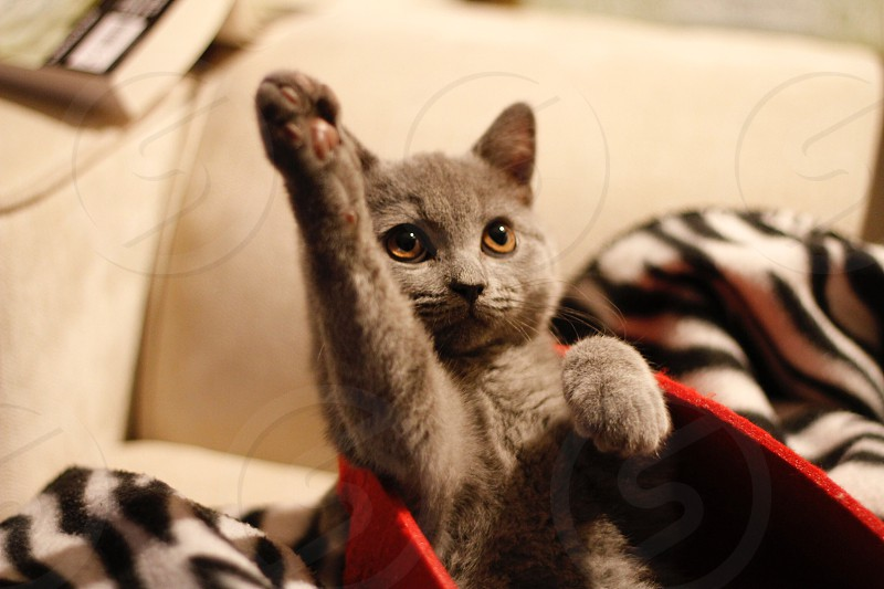 Kitten knows the answer photo