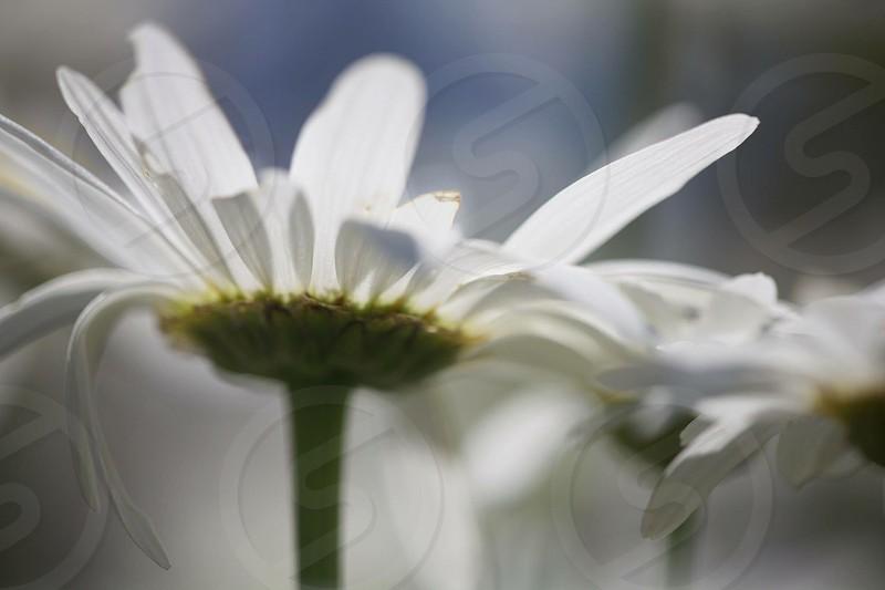 White flowers sky photo